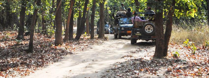 bandhavgarh-national-park-16