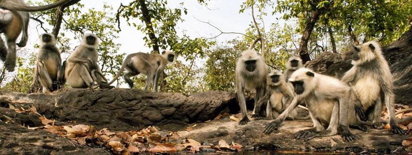 bandhavgarh-national-park-12