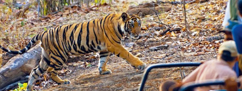 bandhavgarh-national-park-10
