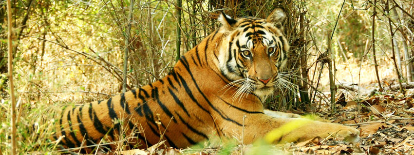 bandhavgarh-national-park-9