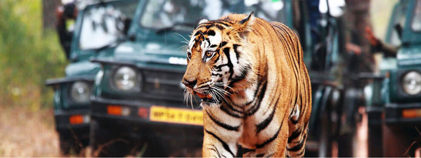 bandhavgarh-national-park-8
