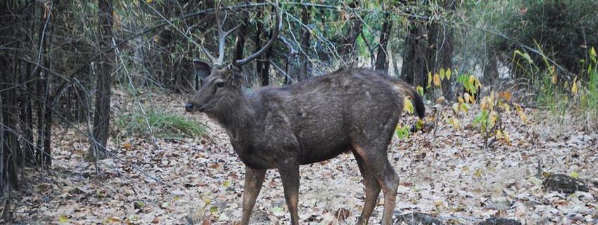 bandhavgarh-national-park-17
