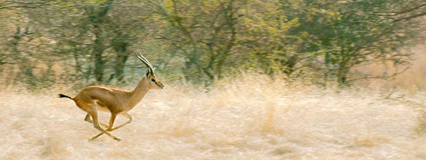 chandraprabha-wildlife-sanctuary-49