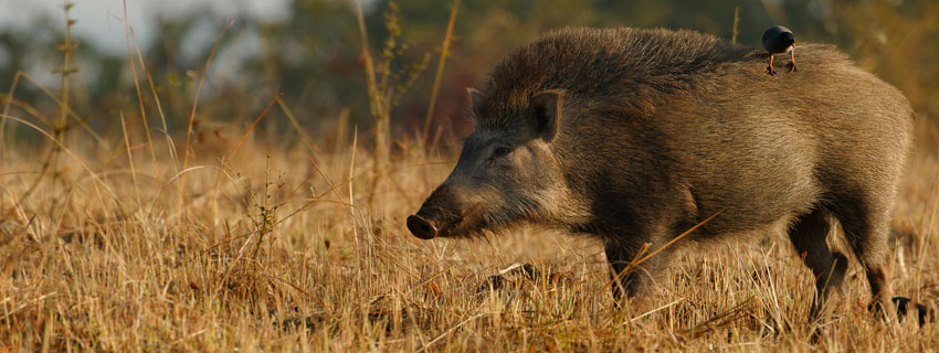chandraprabha-wildlife-sanctuary-47