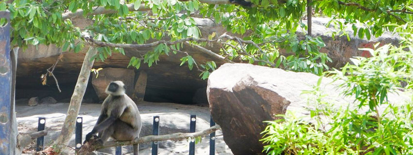 chandraprabha-wildlife-sanctuary-45