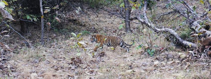 Panna-National-Park-Madhya-Pradesh