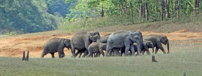 Periyar-Wildlife-Sanctuary]