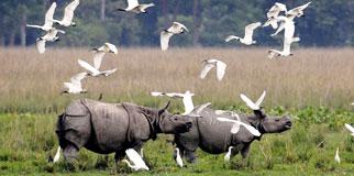 Kaziranga National Park Resorts