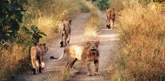 Palamau National Park