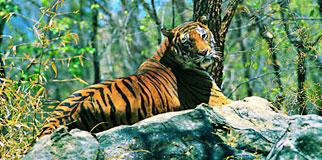 Wayanad Wildlife Sanctuary Resorts